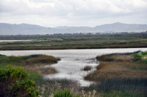Suisun Marsh, San Francisco Bay